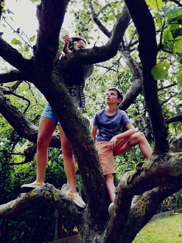 bomen klimmen kamp